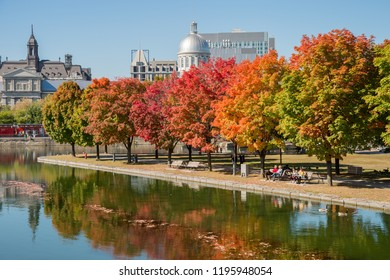 Montreal, CA - 4 October 2016: Maple trees in autumn colors in Montreal Old Port, with Bonsecours Market in background