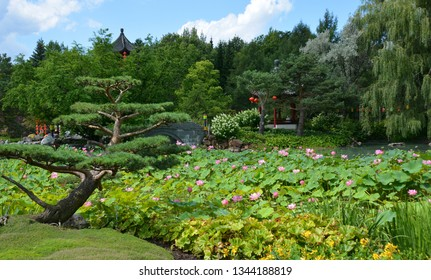 Montreal's lotus botanical garden is considered to be one of the most important botanical gardens in the world due to the extent of its collections