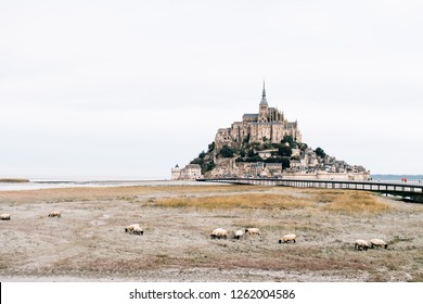 MONT-SAINT-MICHEL, FRANCE/ September 20, 2018: A view on the abbey Mont-Saint-Michel with sheep