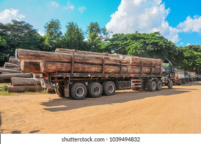 Monywa, Myanmar - November 19 2014. Huge teak logs loaded on to truck beside the Chindwin River