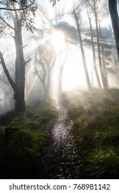 Moody adventure, foggy forest