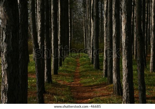 Moody broody dark Forest