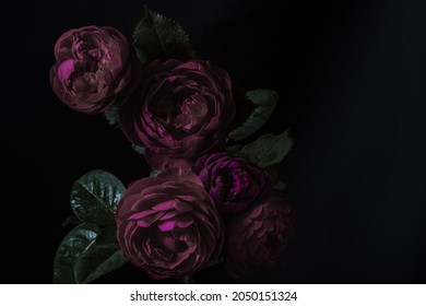Moody flowers. Roses peony purple on a black background. Blur and selective focus. Low key photo. Extreme Flower Close-up. Copy space