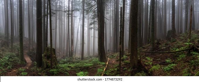 Moody fog rolls in while hiking in British Columbia Canada.