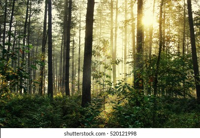 Moody forrest with sunlight