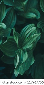 Moody Green Leaves