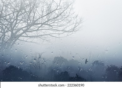 Moody grey seasonal background - trees in fog, rainy foggy day, raindrops flowing on window, depression from fall weather