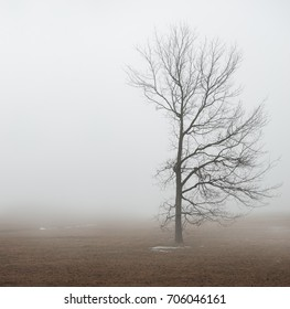Moody Halloween background with alone Tree in fog outdoor