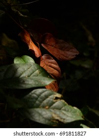 Moody leaves in the forest
