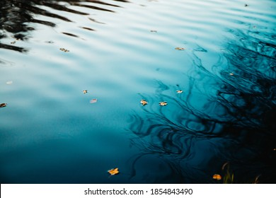 Moody nature photography of fallen leaf on dark water with reflections of autumn trees.