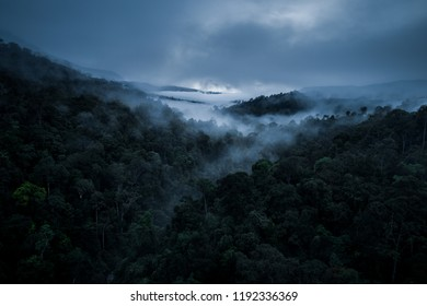 Moody and spooky view of rainforest