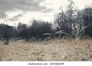 Moody view of dry grass in field, leafless trees in background, early spring, winter or autumn season, gloomy cloudy day