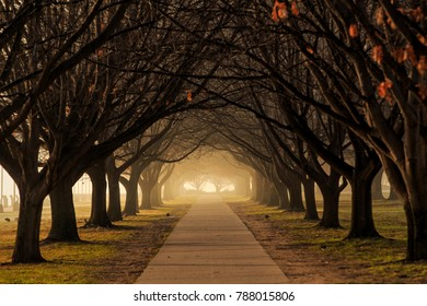 Moody winter trees in Canberra, Australia
