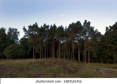 Moon above pines on the Dwingelderveld, the Netherlands