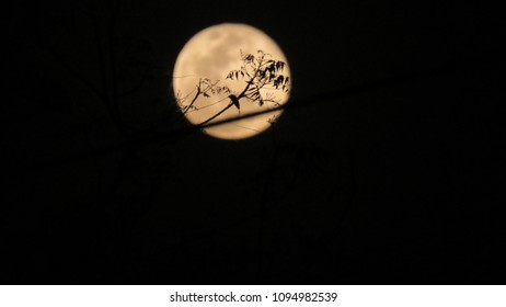 Moon behind tree branch