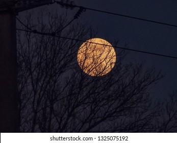 Moon behind trees at sunset