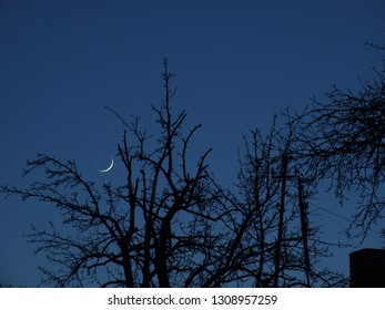 Moon between old branches