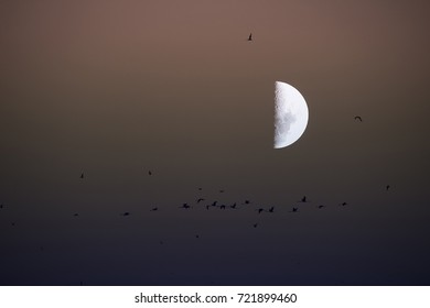 Moon and  birds, abstract