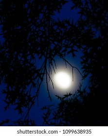 moon in blue night sky with silhouette tree