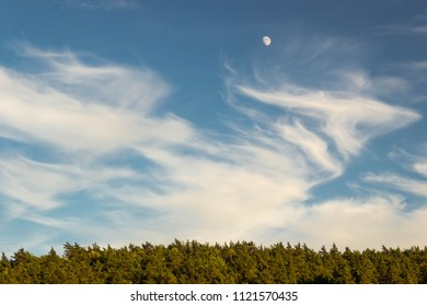 Moon in the clouds above the forest trees top.