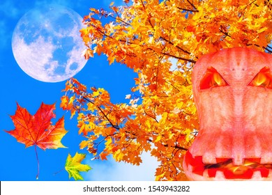 Moon collage of colourful autumn leaves on maple trees and halloween yellow flaming pumpkin on the background of sunny blue sky with clouds