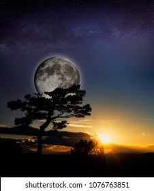 moon and evocative tree