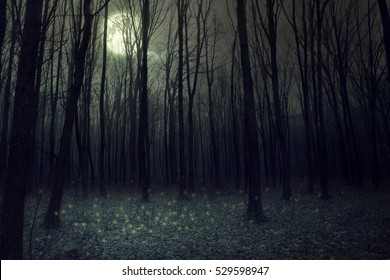Moon light in darkness autumn forest. Halloween background - Shutterstock ID 529598947