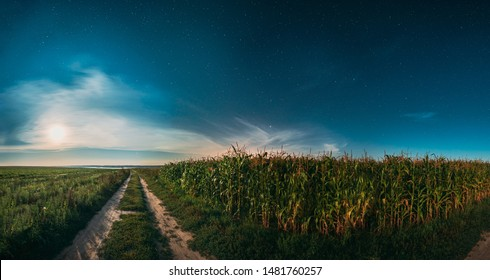 Moon In Night Starry Sky Above Landscape With Rural Country Road Through Green Corn Field And Meadow. Maize Corn Plantation In Summer Agricultural Season. Night Stars Above Cornfield In August Month.