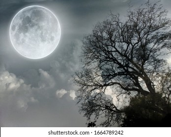 Moon Night Tree in Garden Wallpaper