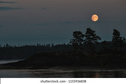 Moon over the forest. Night on the shore of the lake