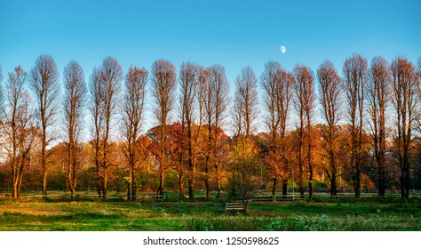 Moon over the trees illuminated by the Sun in autumn season with green meadow in foreground