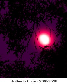 moon in pink and purple night sky with silhouette tree