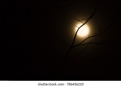 Moon Rise In Fog