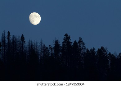 Moon rising above the tree tops over the boreal forest in the Pacific Northwest near the United States / Canada international border - NOT photoshopped