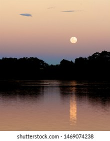 Moon rising on a lake at dusk (Supermoon - November 14th 2016). Soft pink and blue colours. Location is Lake Gwelup, Western Australia