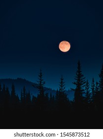the moon rising over top of a forest on a calm summer night with a a dark blue sky and the silhouette of a forest in the foreground
