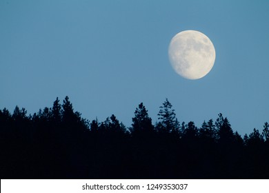 Moon rising over the tree tops, which are tastefully out of focus (selective focus on the moon itself) - not photoshopped
