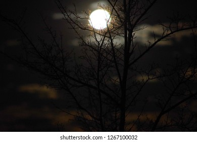 Moon shining bright on a cloudy night from behind a tree without any leaves