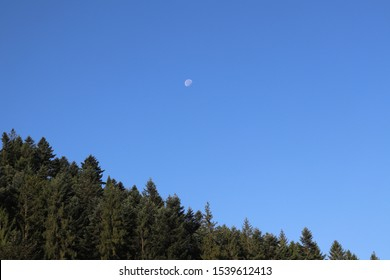 The moon in the sky above the forrest