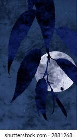 moon spider collage