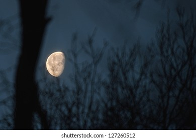 the moon in the tree, image, landscape