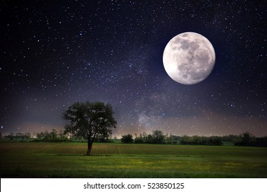 Moon and tree at night