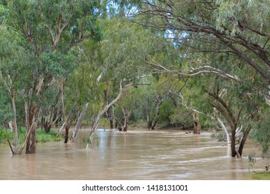 MOONIE RIVER, QUEENSLAND, AUSTRALIA - CIRCA MARCH, 2017: Flood waters flow down the Moonie River, muddy water with colloidal sediment from agricultural runoff making coffee-coloured river water.