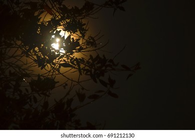 Moonlight Behind Tree Branch And Leaf