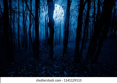 moonlight landscape in horror halloween woods