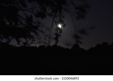 Moonlight and Stars with Tree Silhouette. Night Shoot at Irish Countryside.