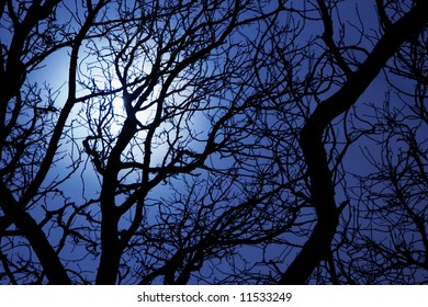Moonlight through branches of a tree