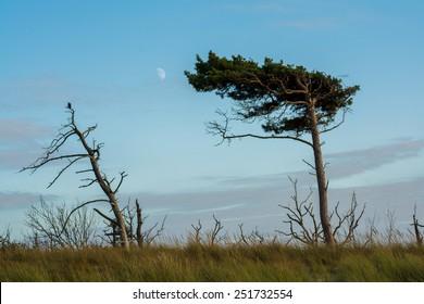 moonrise at Darss Peninsula in Germany