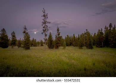 Moonrise in a field