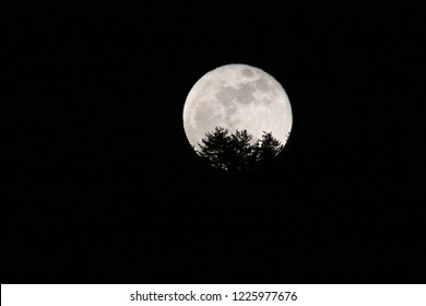 moonrise from the forest